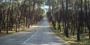 Road, pinewood